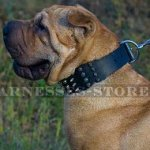Shar-Pei Dog Collar Leather Wide with Spikes and Pyramids