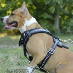 "Designer Dog Harness Unique ""Barbed Wire"" Style for Staffy"