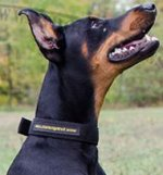 Nylon Dog Collar for Doberman, Strong, Double-Ply, Waterproof