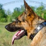 NEW Leather Dog Collars for GSD with Nickel Plated Design