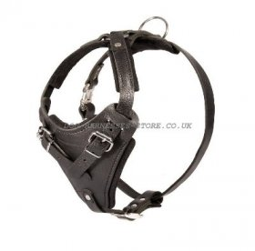 Leather Dog Harness for French Bulldog Control