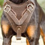 Bestseller! Dog Walking and Training Harness for Doberman