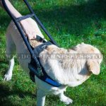 Guide Dog Harness with Handle of Black Nylon, Quick-release