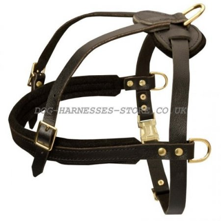 Dog Pulling Harness of Leather for Alano Espanol