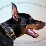 Padded Leather Dog Collar with Brass Hardware and Stitching