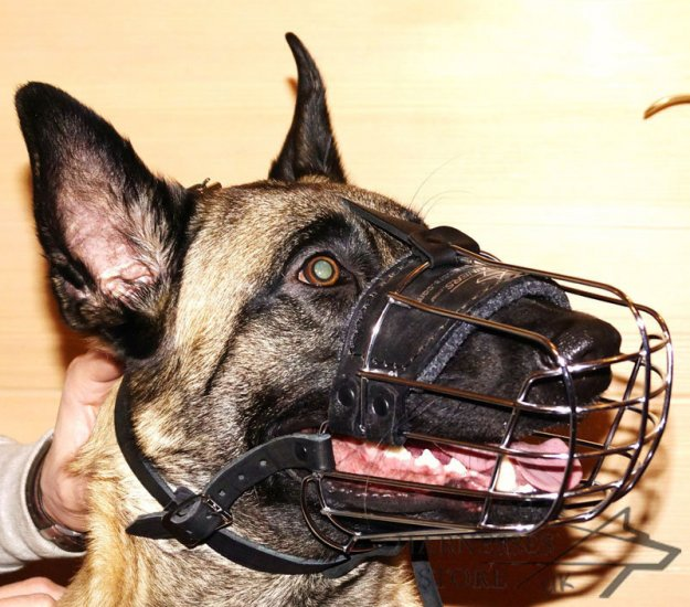 Best Dog Muzzle for Belgian Malinois Daily Activities - Click Image to Close