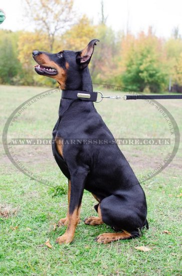 Personalized Dog Collar of Nylon with Blank ID Tag for Doberman