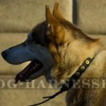 Husky Dog Collar for Walking of Narrow Leather with Round Studs
