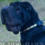 Dog Collar for Shar-Pei Walking, Narrow Leather and Brass Plates