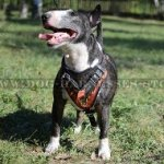 Exclusive Handmade Leather Bull Terrier Harness with Flame Paint