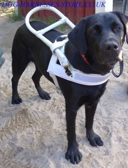 Guide Dog Harness White Leather with Handle-Frame for Labrador