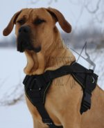 Large Dog Harness UK of Nylon for Dogo Canario, Presa Canario