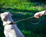 Labrador Dog Leash of Round Leather, Best for Shows