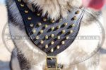 Walking Harness with Brass Spiked Chest for Husky