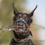 Doberman Muzzle of Wire Basket Design with Adjustable Straps