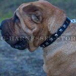 Shar-Pei Dog Collar for Walking, Narrow Leather and Square Studs