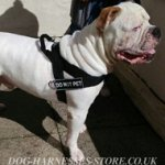 Sport Dog Harness for Ambull with ID Patches
