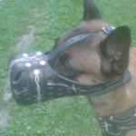 Malinois Muzzle of Unique Design with Hand Barbed Wire Painting