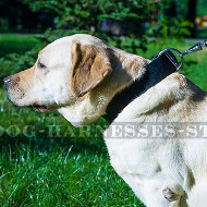 1.5 inch Leather Dog Collar with Classic Buckle & D-ring