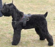 Schnauzer Dog Harness Nylon Multi-Purpose for Training