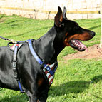 USA Style Hand Painted Unique Leather Dog Harness for Doberman