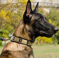 Best Dog Collar with Spikes and Plates for Belgian Malinois