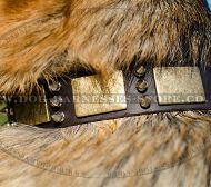 Best Dog Collar with Brass Plates and Nickel Spikes for GSD