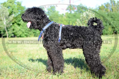 Russian Terrier Harness