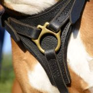 Leather Dog Harness for German Boxer UK, Best