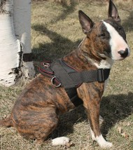 Bull Terrier Harness for Tracking/Pulling, Nylon Harness