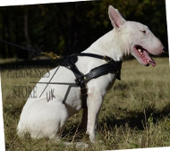 Dog Pulling Harness