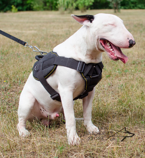 Bull Terrier Harness. Bull Terrier with Comfy and Soft Nylon Dog Harness