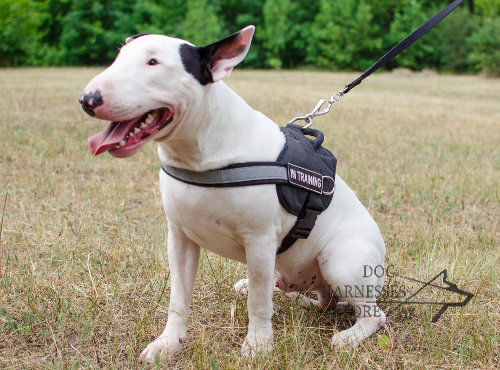 English Bull Terrier Harnesses UK