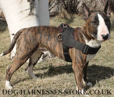 Dog Pulling Harness for Bull Terrier