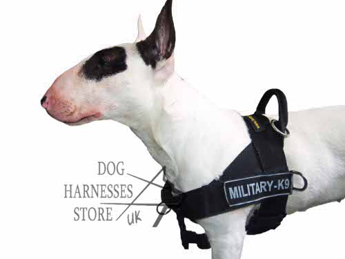 Mini Bull Terrier Harness UK