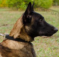 Classic Dog Collar for Malinois Shepherd Daily Activities