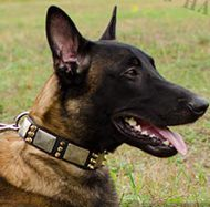 Cool Dog Collar with Spikes and Plates for Belgian Shepherd