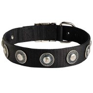 Designer Dog Collar with Silver Conchos, Wide Nylon Strap