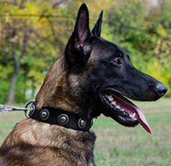 Nylon Dog Collar with Vintage Conchos for Belgian Malinois