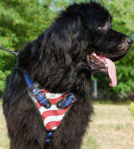 "Handmade Dog Harness ""USA Style"" for Newfoundland"