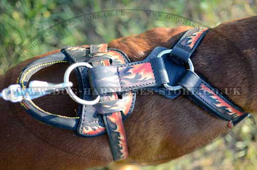 German Boxer Harness UK