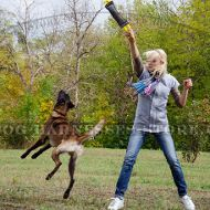 Fetch Dog Training