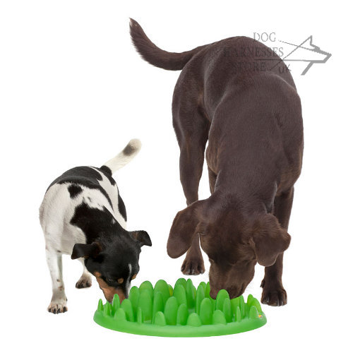 Dog Bowl UK