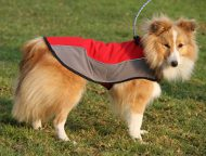 Dog Jacket for Sheltie, Waterproof Coat of Nylon for Warming