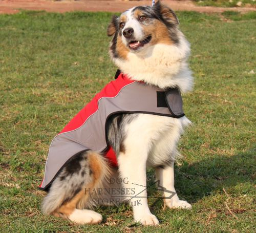 Australian Shepherd Dog Clothes