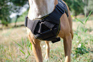 Dog Sport Harness for Pitbull | Nylon Dog Training Harness