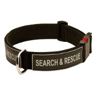 Dog Training Collar of Nylon with Buckle and ID Velcro Patches