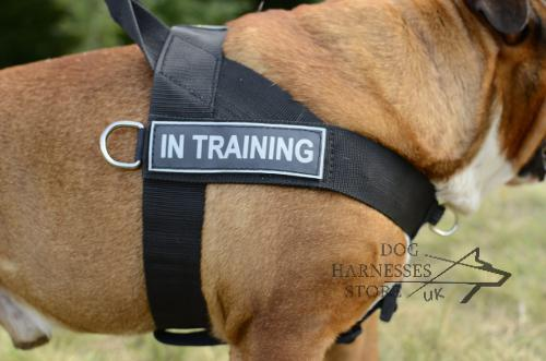 British Bulldog Harnesses