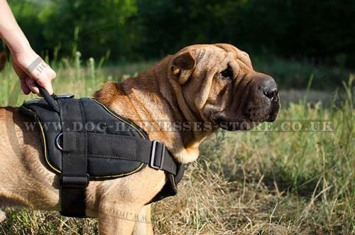Shar Pei Harnesses UK