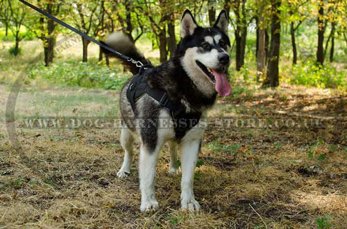Malamute Harness for Sale